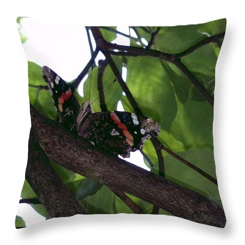 Butterfly Throw Pillow featuring the photograph Sitting On A Branch by Michelle DiGuardi
