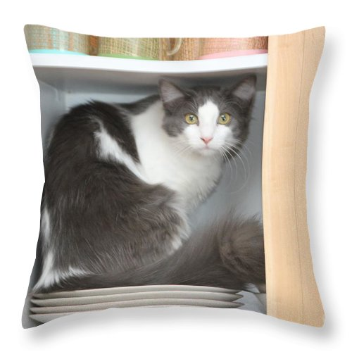 Cat Throw Pillow featuring the photograph Sitting On The Dish by Michelle Powell