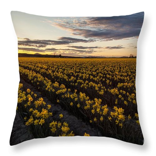 Skagit Throw Pillow featuring the photograph Skagit Daffodils Sunset Sunstar by Mike Reid