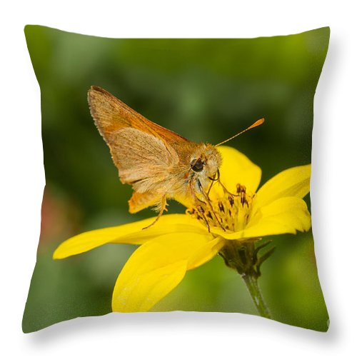 Butterfly Throw Pillow featuring the photograph Skipper In The Flowers by Mimi Ditchie