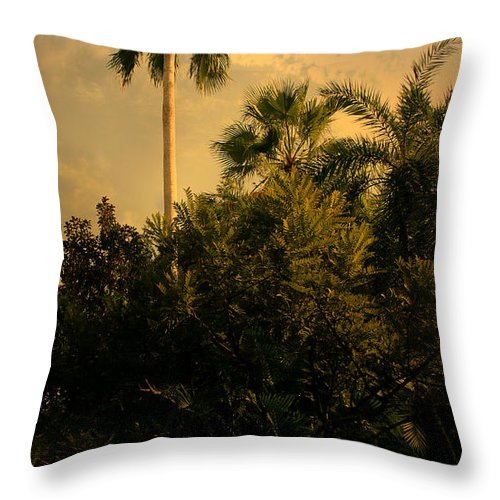Tree Throw Pillow featuring the photograph Skyward by Nina Fosdick