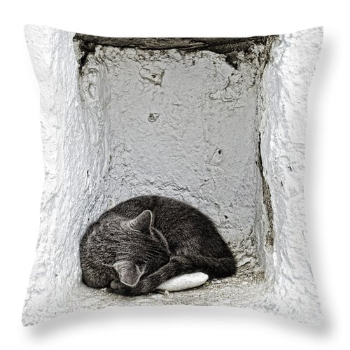 Cat Throw Pillow featuring the photograph Sleeping Cat by Paul and Helen Woodford