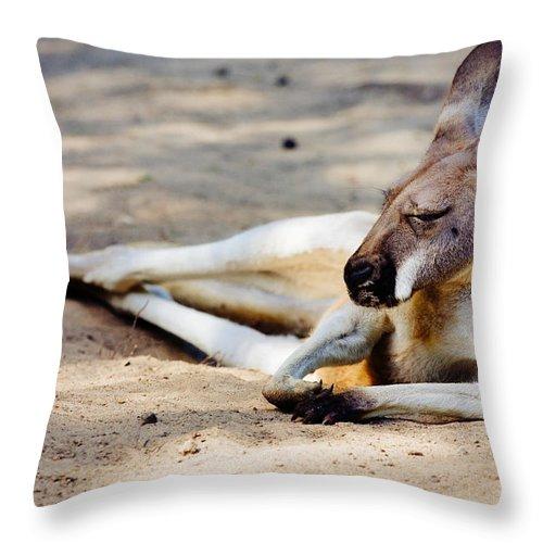 Kangaroo Throw Pillow featuring the photograph Sleeping Kangaroo by Pati Photography