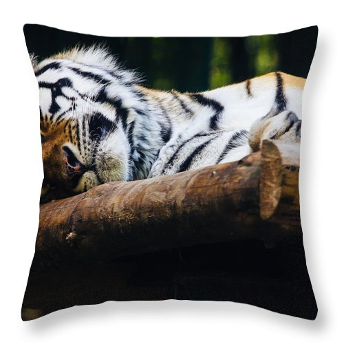 Tiger Throw Pillow featuring the photograph Sleeping Tiger by Pati Photography