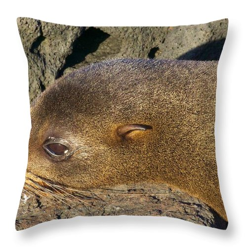 Baby Sealion Throw Pillow featuring the photograph Sleepy Baby by Allan Morrison