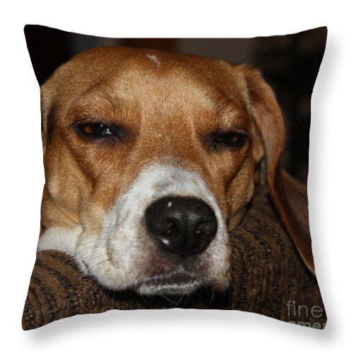 Sleepy Beagle Throw Pillow featuring the photograph Sleepy Beagle by John Telfer