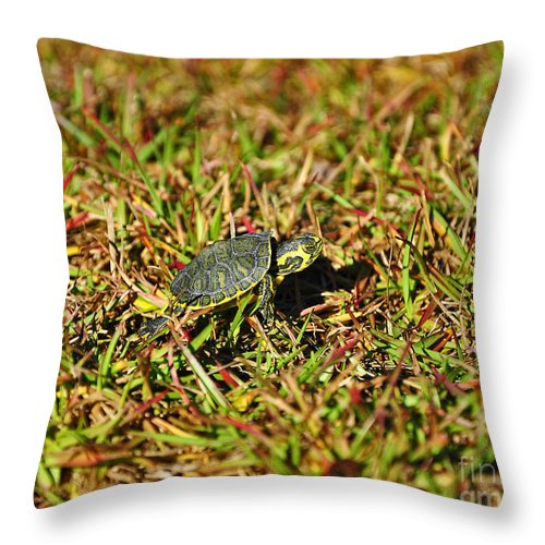Turtle Throw Pillow featuring the photograph Slider To Go by Al Powell Photography USA