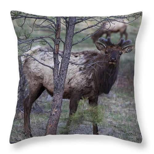 Landscapes Throw Pillow featuring the photograph Slim Pickin's by Amber Kresge