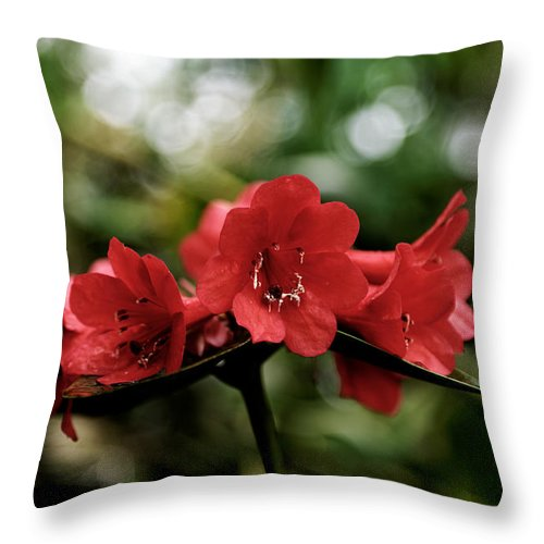 Red Flowers Throw Pillow featuring the photograph Small Red Flowers by Scott Hill