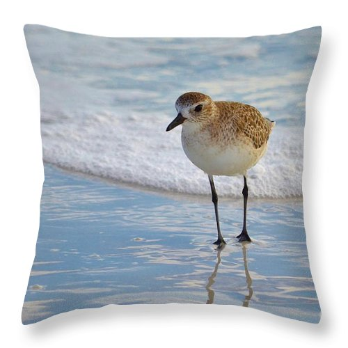 Shore Birds Throw Pillow featuring the photograph Small Sandpiper by Carol McGunagle