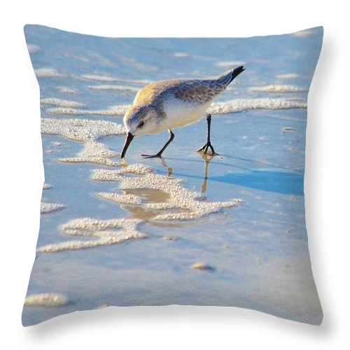 Shore Birds Throw Pillow featuring the photograph Small Sandpiper Looking For Dinner by Carol McGunagle