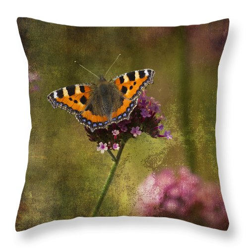 Clare Bambers Throw Pillow featuring the photograph Small Tortoiseshell Butterfly by Clare Bambers
