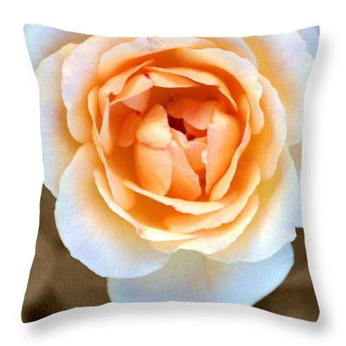 Flower Throw Pillow featuring the photograph Smooth Angel Rose by Holly Kempe