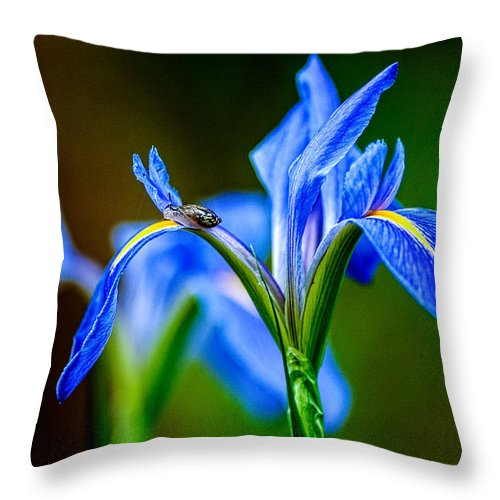 Andy Crawford Throw Pillow featuring the photograph Snail On A Louisiana Iris by Andy Crawford