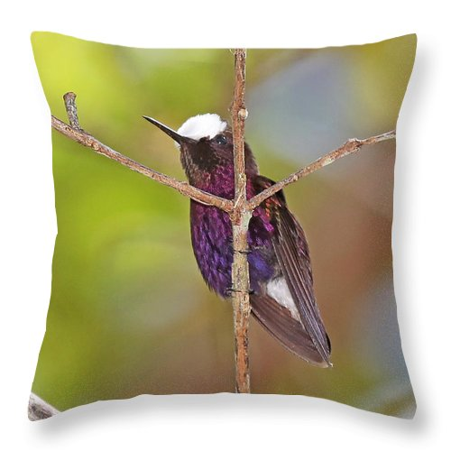 Nature Throw Pillow featuring the photograph Snow Cap 1 by Mike Dickie