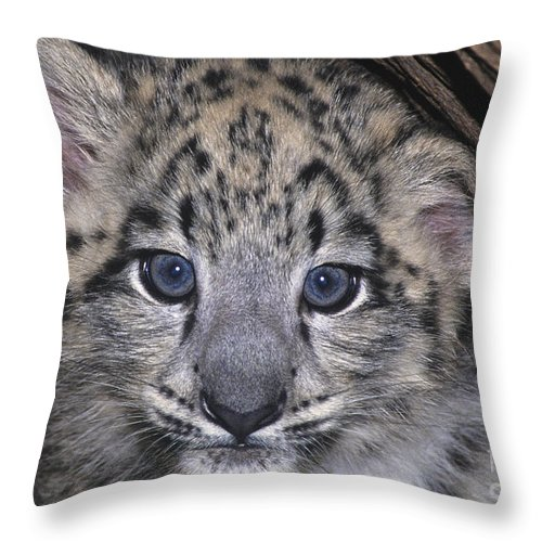 Asia Throw Pillow featuring the photograph Snow Leopard Cub Endangered by Dave Welling