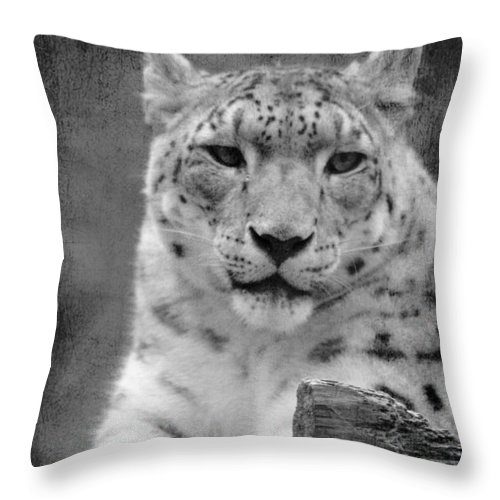 Snow Leopard Throw Pillow featuring the photograph Snow Leopard by Linda Sannuti