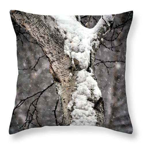 Birch Tree Throw Pillow featuring the photograph Snow On The Birch by Charlene Palmer
