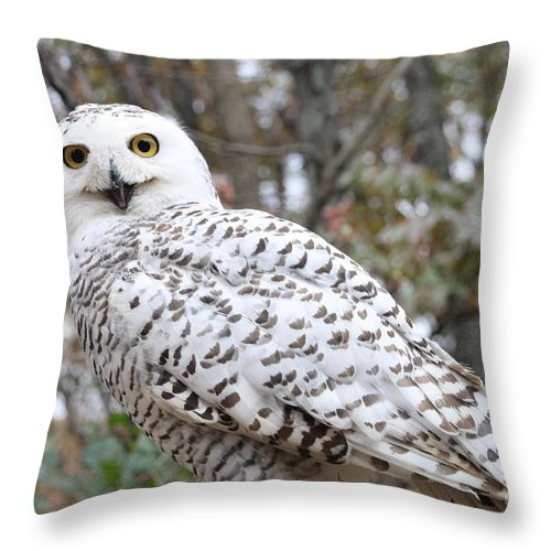 Owlowlsbirdwildlifebirdssnownaturesnow Owlwinterwhitesnowy Owlsnowyraptorcoldanimaltreeathenalandscapewildwhite Owlsnowingwhite Birdsnighttreesbird Of Prey Throw Pillow featuring the pyrography Snow Owl by Laurie Chrisco