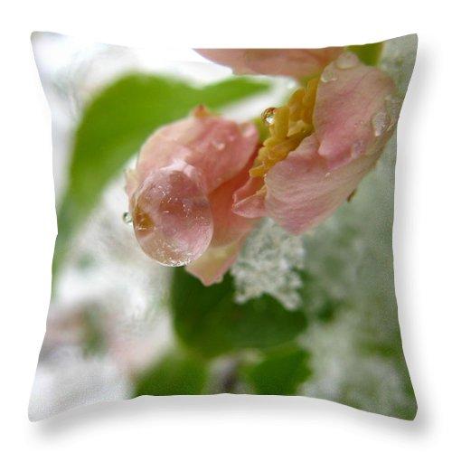 Flower Throw Pillow featuring the photograph Snowy Drop by Rhonda Barrett