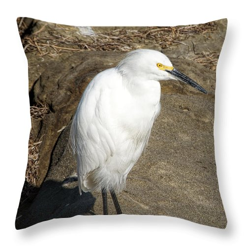 Snowy Egret Throw Pillow featuring the photograph Snowy Egret by Alan Hutchins