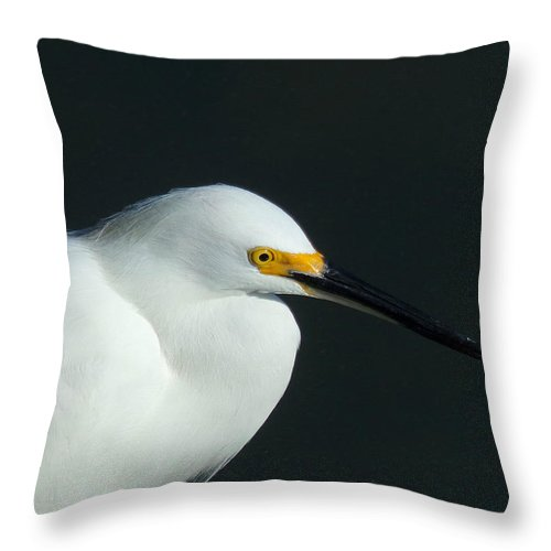 Bird Throw Pillow featuring the photograph Snowy Egret by Gary Creson