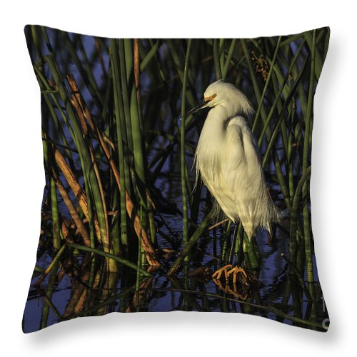 Bird Throw Pillow featuring the photograph Snowy Egret In The Reeds by Maria Struss