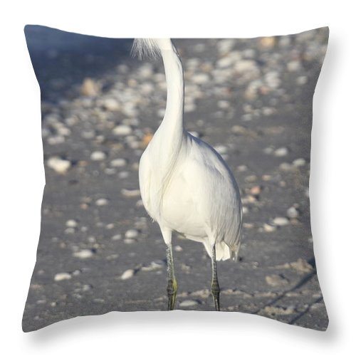 Snowy Egret Throw Pillow featuring the photograph Snowy Egret Pose by Christiane Schulze Art And Photography