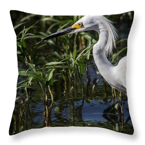 Animal Throw Pillow featuring the photograph Snowy Egret Stalking by Robert Frederick