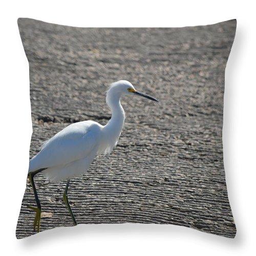 Snowy Egret Throw Pillow featuring the photograph Snowy Egret Walk by Linda Kerkau