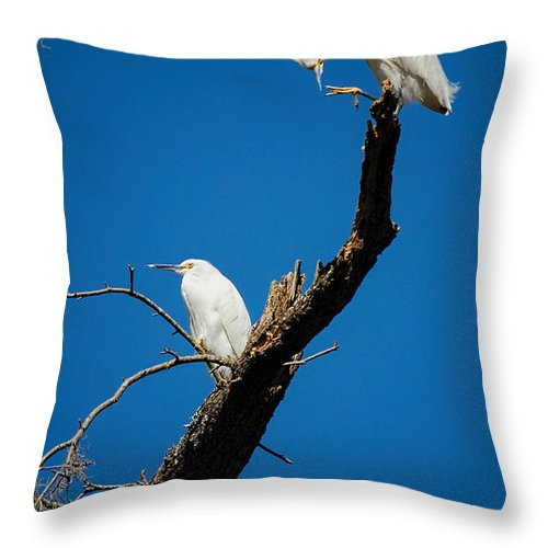 Egret Throw Pillow featuring the photograph Snowy Egrets by Donna Proctor