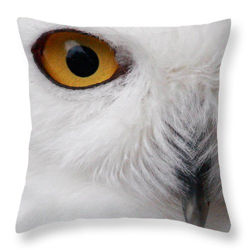 Snowy Owl Throw Pillow featuring the photograph Snowy Owl by Andrew McInnes