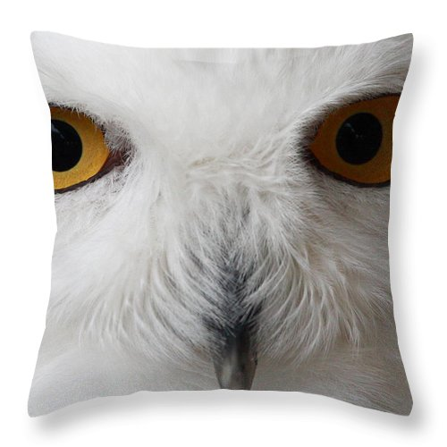 Snowy Owl Throw Pillow featuring the photograph Snowy Owl Stare by Andrew McInnes