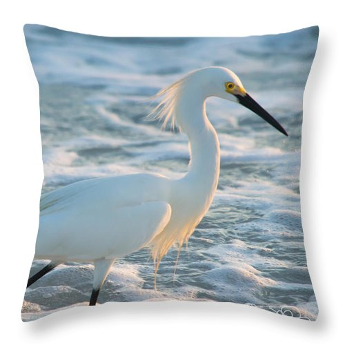 susan Molnar Throw Pillow featuring the photograph Snowy Siesta Key Sunset by Susan Molnar