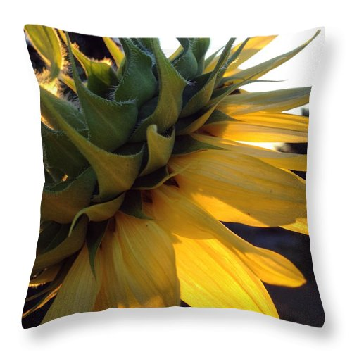 Throw Pillow featuring the photograph Soaking It All In by Noel Carey