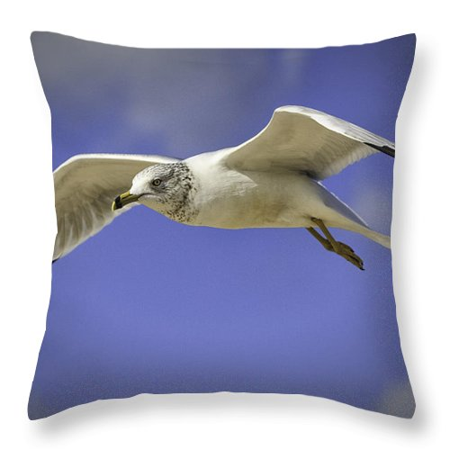 Gull Throw Pillow featuring the photograph Soaring by Fran Gallogly