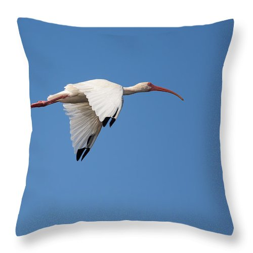 Sky Throw Pillow featuring the photograph Soaring White Ibis by John M Bailey