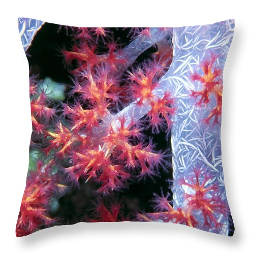 Micronesia Throw Pillow featuring the photograph Soft Corals 18 by Dawn Eshelman
