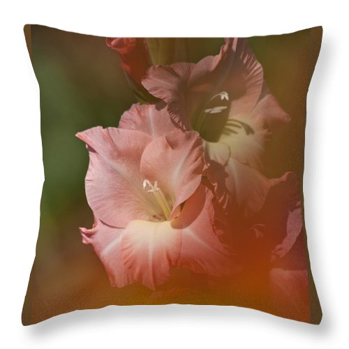 Gladiolus Throw Pillow featuring the photograph Soft Gladiolus by Heiko Koehrer-Wagner