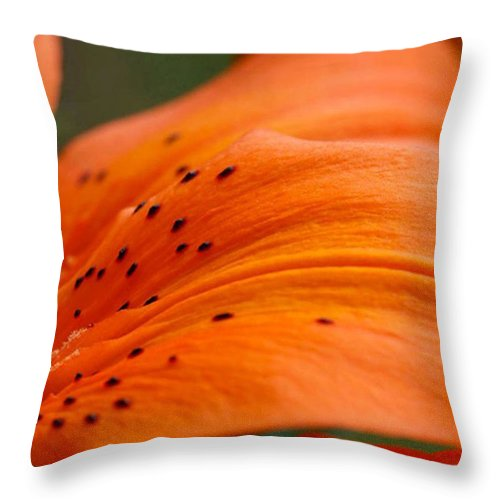 Flower Throw Pillow featuring the photograph Soft Lily by Carol Lynch