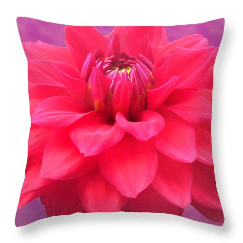 Floral Throw Pillow featuring the photograph Softer Summer Dahlia by Tammy Garner