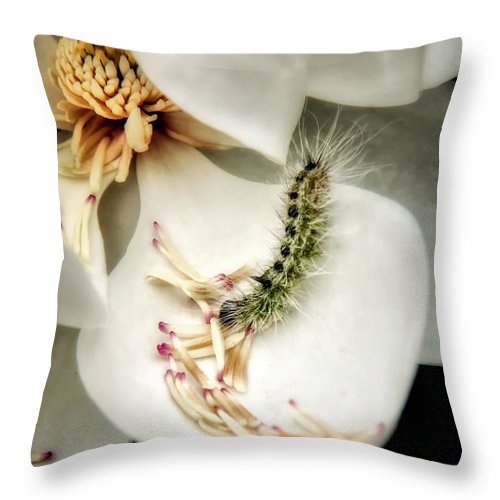 Magnolia Canvas Print Throw Pillow featuring the photograph Softest Little Gem by Lucy VanSwearingen