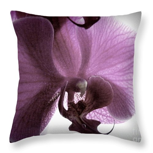 Backlit Orchid Throw Pillow featuring the photograph Softness by Kitrina Arbuckle