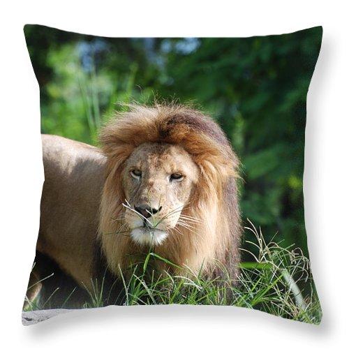 Lion Throw Pillow featuring the photograph Solemn Lion by DejaVu Designs
