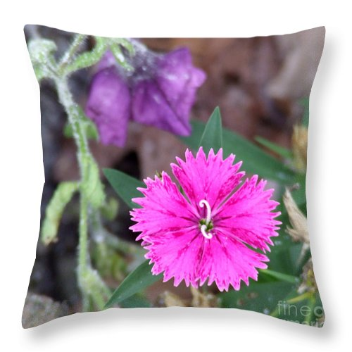 Flower Throw Pillow featuring the photograph Solitary by Andrea Anderegg