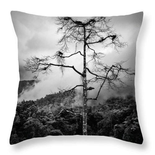 Cameron Highlands Throw Pillow featuring the photograph Solitary Tree by Dave Bowman