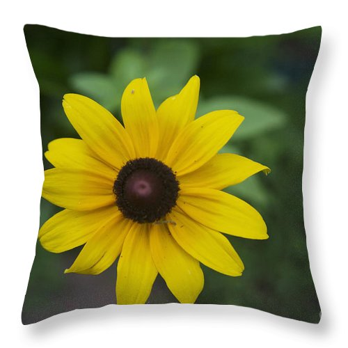 Solo Black-eye Susan Throw Pillow featuring the photograph Solo Black-eye Susan by Luther Fine Art