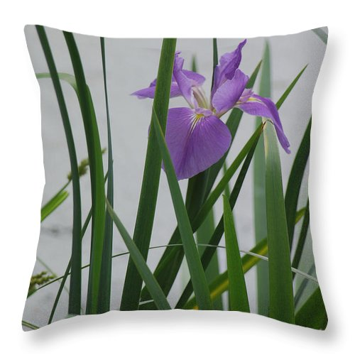 Iris Throw Pillow featuring the photograph Solo Iris by Suzanne Gaff