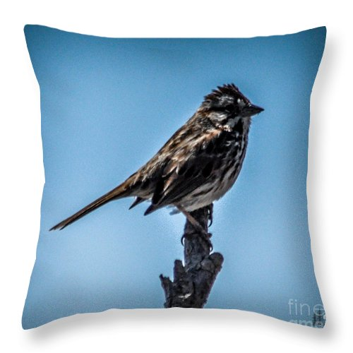 Bird Throw Pillow featuring the photograph Song Sparrow On Top Of Branch by Ronald Grogan