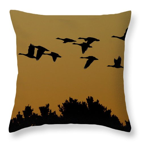 Geese Throw Pillow featuring the photograph Southbound by Neal Eslinger